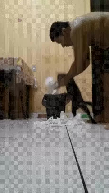 Watch Education GIF by @seigneur_ced on Gfycat. Discover more cat, chat GIFs on Gfycat