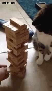 Watch cat playing jenga GIF on Gfycat. Discover more related GIFs on Gfycat