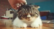 Watch and share Cat Scratch GIFs on Gfycat