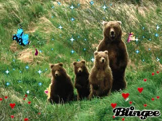 Watch and share Mama Bear GIFs on Gfycat