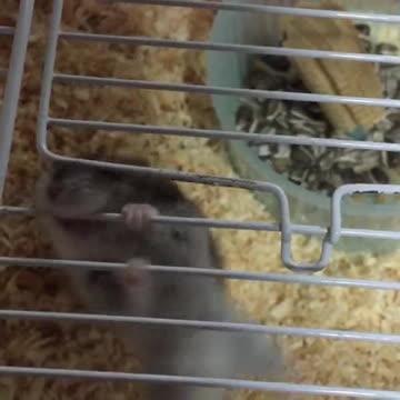 epic, video, viral, Hamster jailbreak GIFs