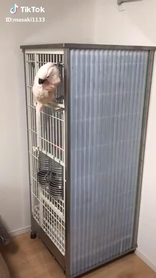 Watch 滑り降りる(*≧艸≦)ʬʬʬ消防士? #地上波にでたい #自慢のペット #オウム #bird  #カリン #parrot #cockatoo #オオバタン #鳥 #ピンク GIF by gifs (@awaretoe) on Gfycat. Discover more bird, cockatoo, parrot GIFs on Gfycat
