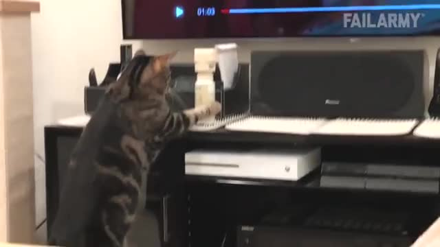 Watch and share Curiosity Flung The Cat GIFs on Gfycat