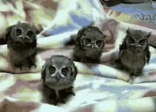 Watch and share No You Didnt Owls GIFs on Gfycat