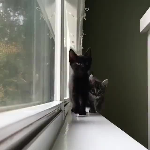 Watch and share Kittens GIFs and Cat GIFs on Gfycat
