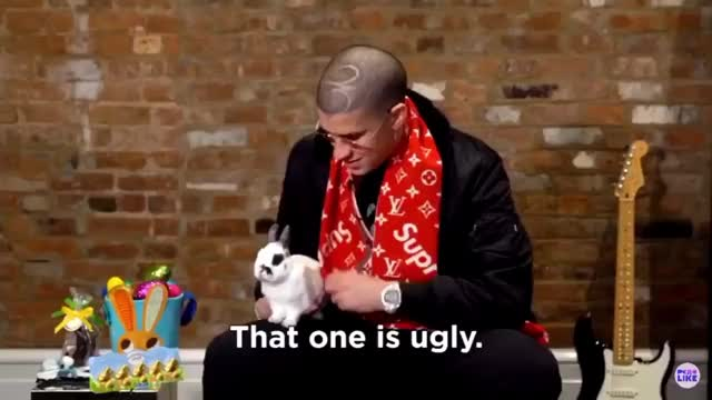 Watch this bad bunny GIF by rj (@rjtonamen) on Gfycat. Discover more bad bunny, bunny, bunny-bully, el conejo malo, feo, rabbit, that one is ugly, ugly GIFs on Gfycat
