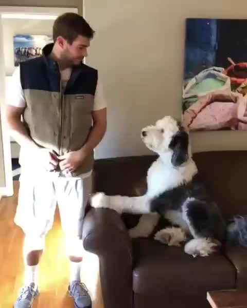 Pup gives his seal of approval for his human's new shirt GIFs