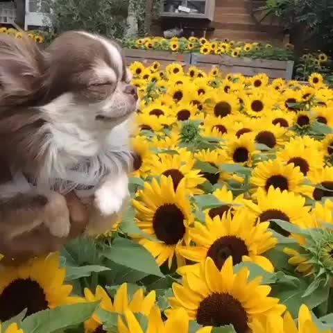 Shibe pupper does an swim (reddit) GIFs