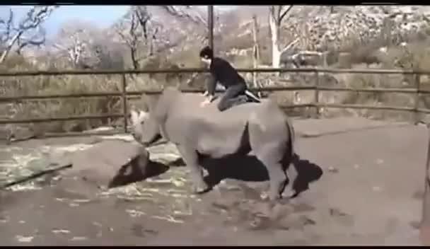 Watch and share Rhinoceros GIFs and Rhino GIFs on Gfycat
