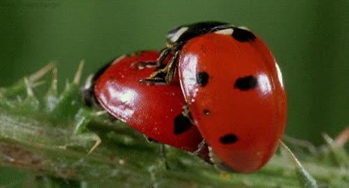 Watch and share Ladybug GIFs on Gfycat