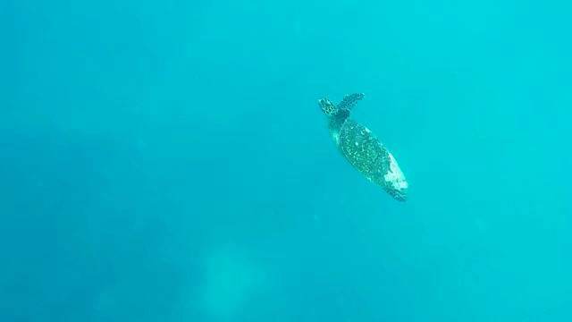 Watch and share Gopro Maldives GIFs by JiffyDealer on Gfycat