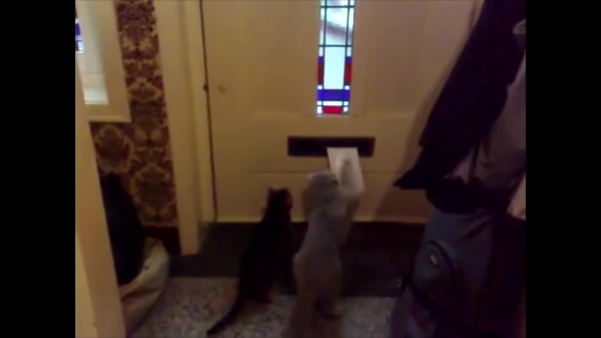 cats, cattaps, vs, Cats Waits For The Mailman | Cats Getting Mail Compilation GIFs