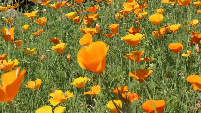 Watch and share Botanic Garden GIFs by dangavri on Gfycat