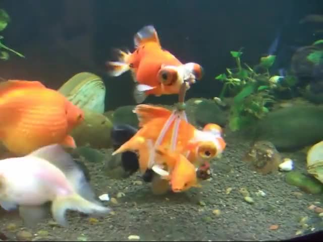 Watch and share Goldfish Sling GIFs on Gfycat