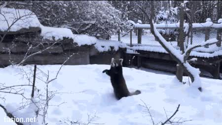 Watch and share Panda Sex Tree animated stickers on Gfycat
