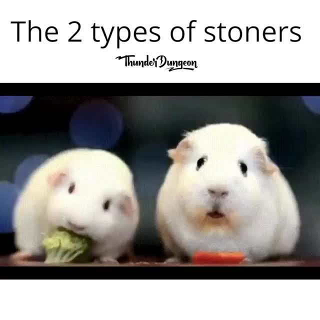 two type of stoners