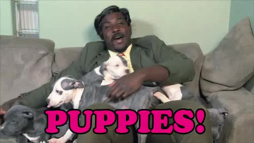 Watch and share Tyler The Creator GIFs and Puppies GIFs on Gfycat