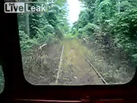 Watch and share Поездка На Поезде Через Заросли GIFs on Gfycat