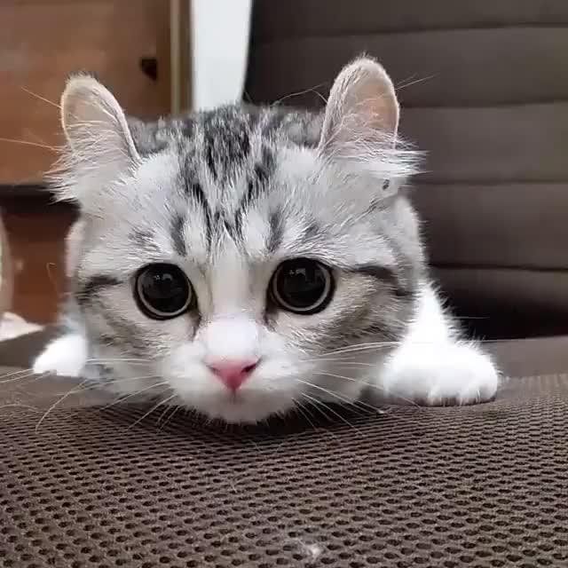 Гифы кошки, объемными