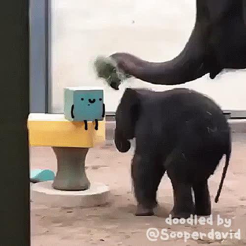 elephant, elephants, reallifedoodles, why push me friend? GIFs