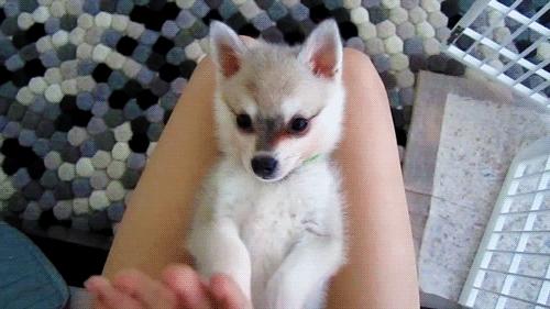 High Five Puppy GIFs
