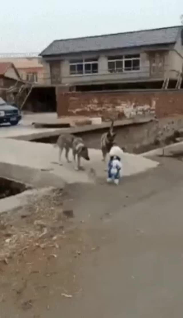 Watch and share Smurfdog GIFs by bsurfn2day on Gfycat