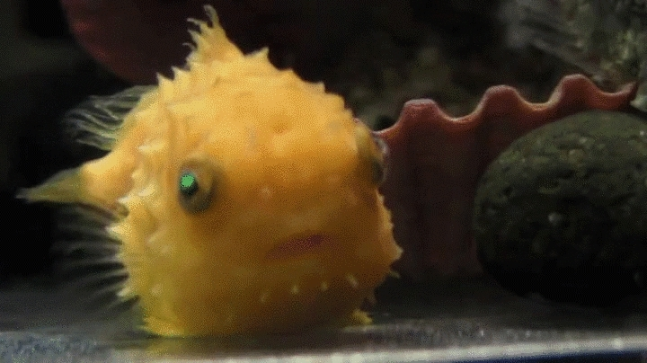 highqualitygifs, Fish mind blown GIFs