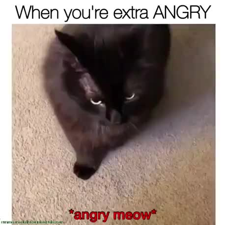 Extra ANGRY