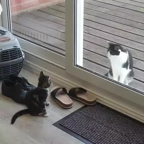 cat, cats, funny, Come closer, friend. Don't be scared. GIFs