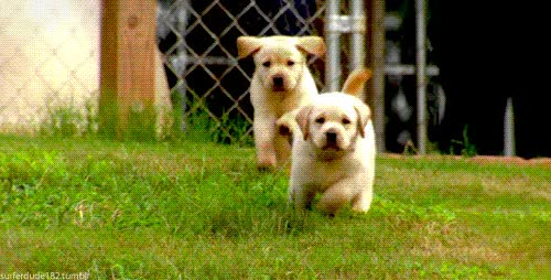 Watch and share Gifs De Perritos Para Compartir Perros Jugando GIFs on Gfycat