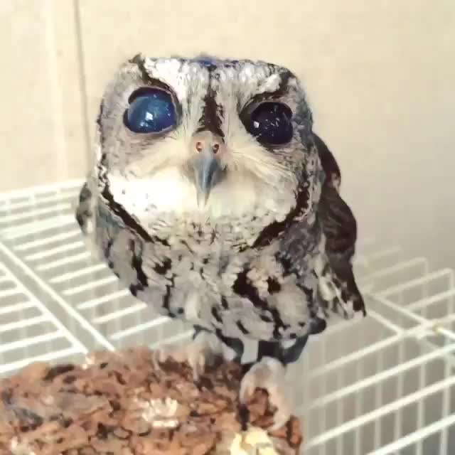 Watch and share Owl GIFs by Hamad on Gfycat
