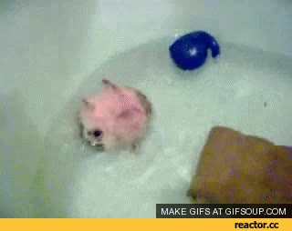 Watch bath GIF on Gfycat. Discover more related GIFs on Gfycat