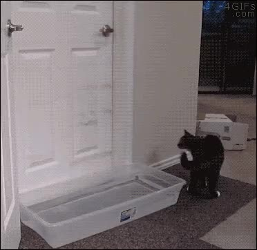 Donald_Keyman, Your plastic moat can't stop me you fool GIFs
