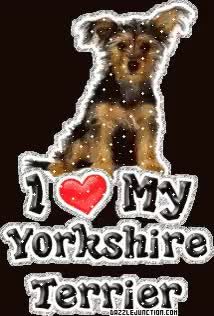 Watch and share Yorkshire GIFs on Gfycat