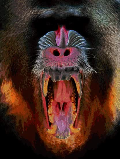 Watch and share Mandrill Mood GIFs by mementori on Gfycat