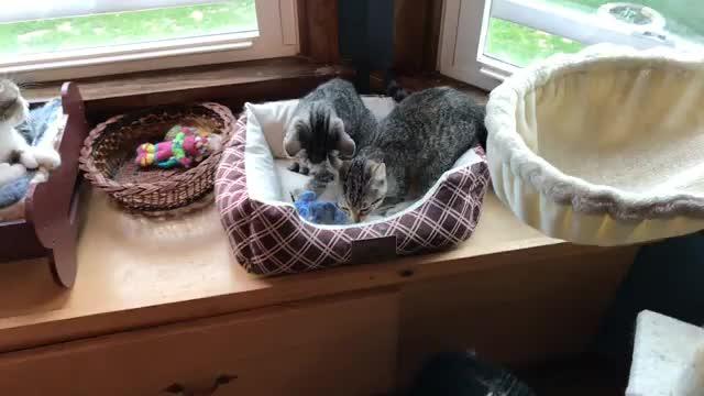 kittens, Pretzel Kittens! GIFs