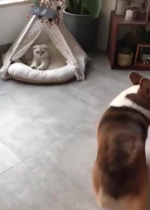 Watch and share Cat GIFs and Dog GIFs by tothetenthpower on Gfycat