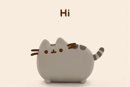 cat, cute, hello, hey, hi, pet, sweet, Hi! GIFs