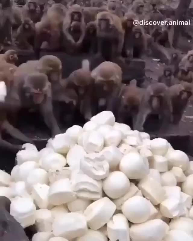 Watch and share Monkeys GIFs by GB on Gfycat