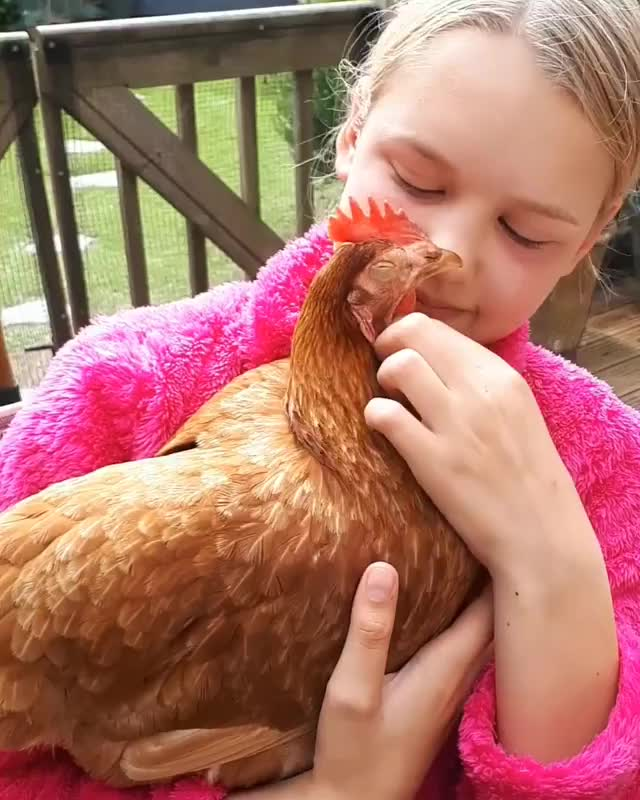 Watch and share Petchickens GIFs and Livekindly GIFs by b12ftw on Gfycat