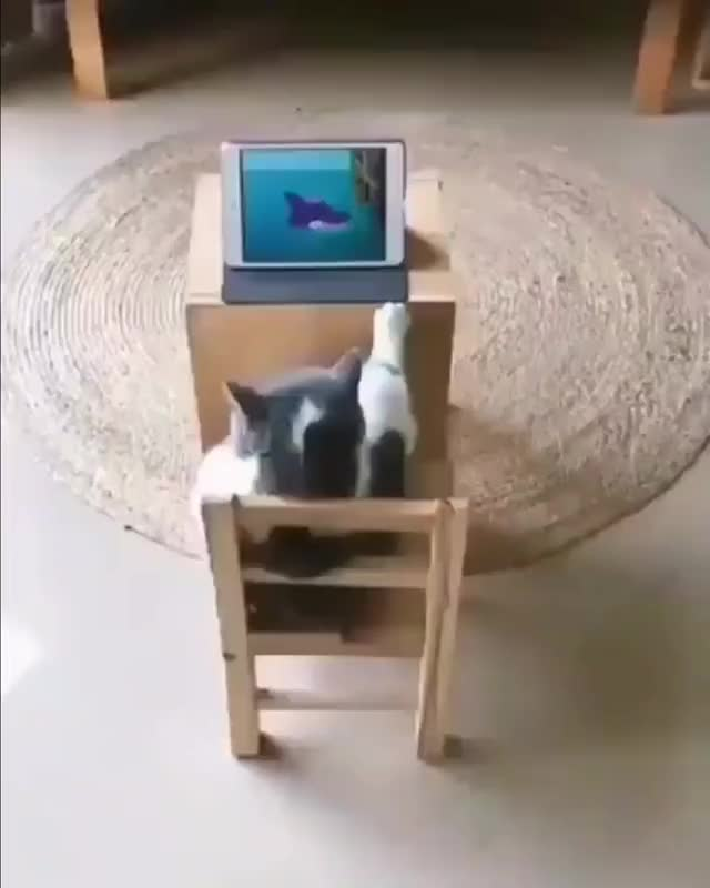 Watch and share Technology GIFs and Cat GIFs by Ran Mitake on Gfycat