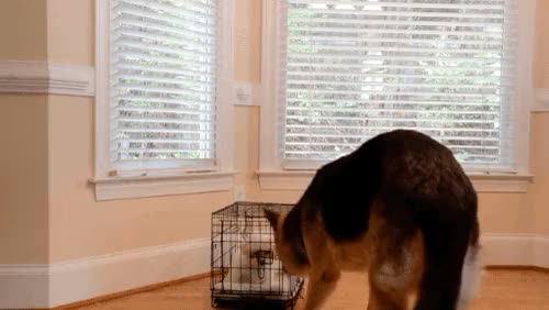 Watch Enjoy. (reddit) GIF on Gfycat. Discover more animalsbeingbros GIFs on Gfycat