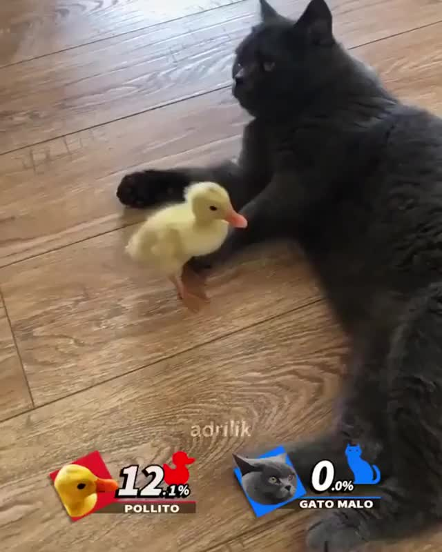 Watch and share Smash GIFs by tankor on Gfycat