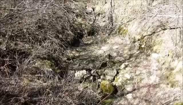 Living Carpet of Snakes!