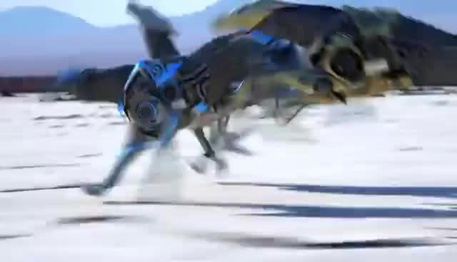 greyhound, shm, GREYHOUND GIFs