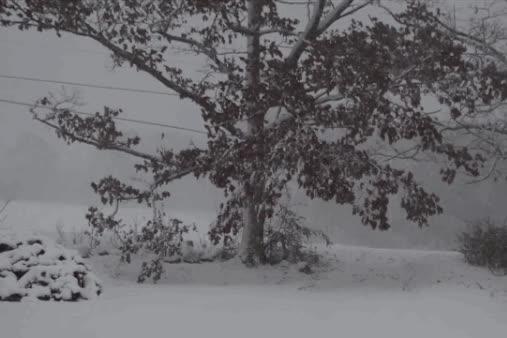 maine blizzard GIFs