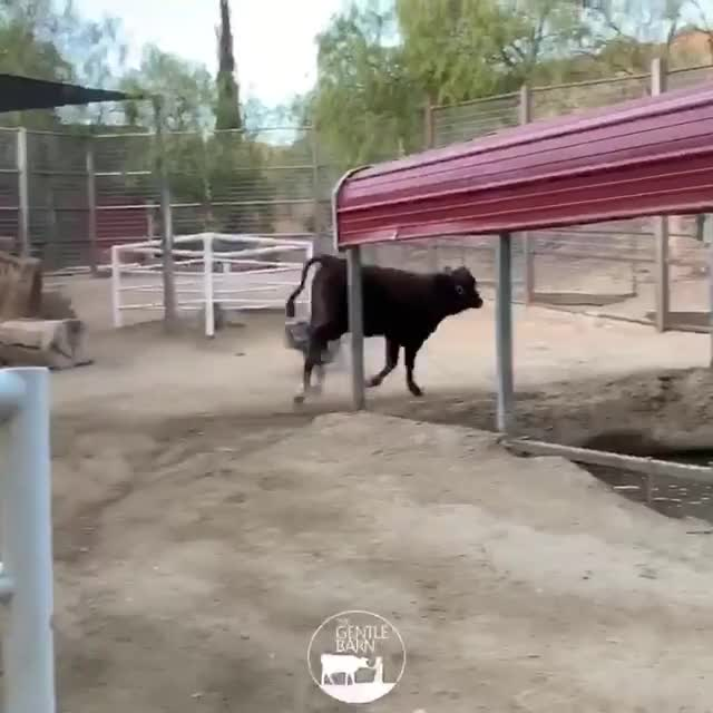 Watch and share Animals Playing GIFs and Animal Friends GIFs by lnfinity on Gfycat