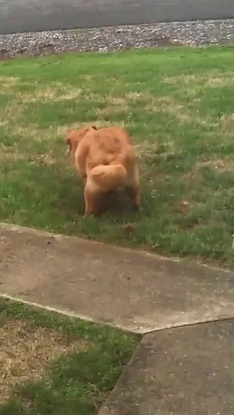 Watch and share Lil Pupper GIFs by likkaon on Gfycat