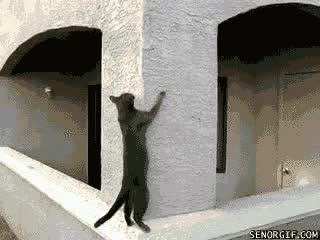 Watch climbing GIF on Gfycat. Discover more related GIFs on Gfycat