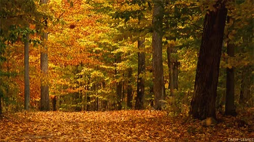 Watch and share Fall-leaves-autumn-gif-4 GIFs on Gfycat